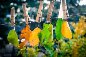 foglie al vento