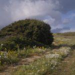 Paesaggio rurale di Sardegna